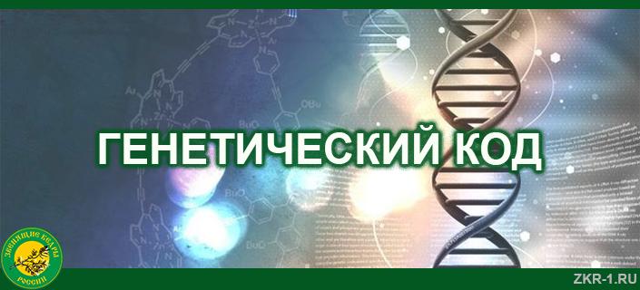 20-GENETICHESKIJ-KOD